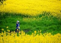 Tour 30 - 4 : PHÚ YÊN : Tôi đã thấy Hoa Vàng trên Cỏ Xanh
