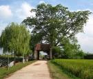 Tour Hà Nội - Đền Và – Chùa Mía – Làng Cổ Đường Lâm – Tản Đà
